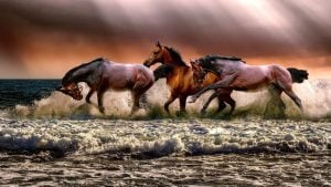 3 horses Image by ATDSPHOTO from Pixabay
