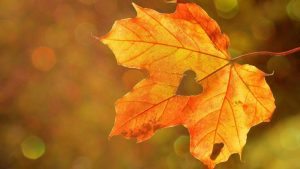 Leaf Heart Fall Image by Rebekka D from Pixabay