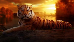 Tiger Image by 1980supra from Pixabay
